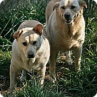 Cattle Dog Mix Dog for adoption in Jackson, Mississippi - Thelma & Louise