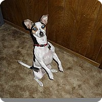 Adopt A Pet :: Rami - Kingwood, TX