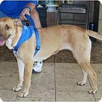 Adopt A Pet :: Bella - Minneola, FL