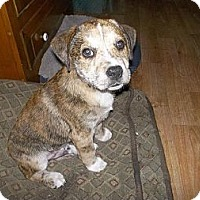Adopt A Pet :: Turk - Shirley, NY