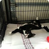 Adopt A Pet :: Frankie - Speonk, NY