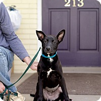 Adopt A Pet :: Natalie - Knoxville, TN