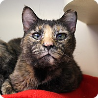 Adopt A Pet :: Maybeline Mascara - Chicago, IL