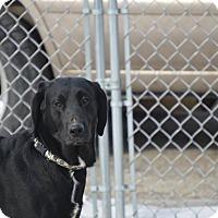 Adopt A Pet :: Blackie - Cedar Rapids, IA