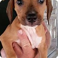 Adopt A Pet :: Wolverine - Gainesville, FL