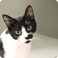 Adopt A Pet :: Stitch - Mission, BC