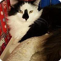 Adopt A Pet :: Felicia - Raritan, NJ
