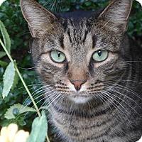 Adopt A Pet :: Eliot - Brooklyn, NY