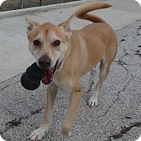 Adopt A Pet :: Bronco - Seguin, TX