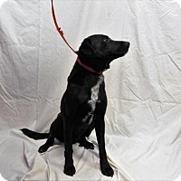 Adopt A Pet :: Harold - 120724j - Tupelo, MS