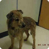 Adopt A Pet :: A572758 - Oroville, CA