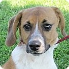 Adopt A Pet :: Russ