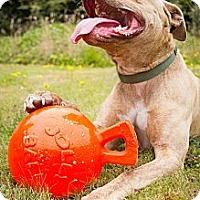 Adopt A Pet :: Conrad - Crescent City, CA