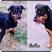 Adopt A Pet :: Bella - Darlington, MD