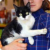 Adopt A Pet :: Norma Desmond - Brooklyn, NY