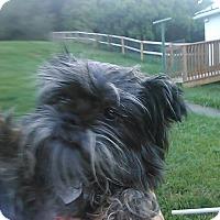 Adopt A Pet :: Stella - Cumberland, MD