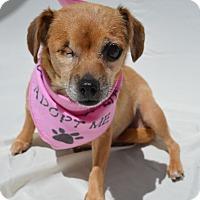 Adopt A Pet :: Peggy Sue - Aurora, CO