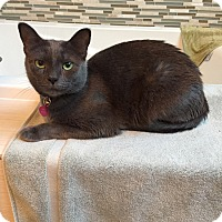Adopt A Pet :: Princess - Laguna Woods, CA