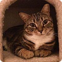 Adopt A Pet :: Nelita - Merrifield, VA