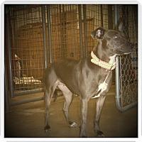 Adopt A Pet :: SUZIE - Medford, WI