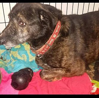 Shepherd (Unknown Type) Mix Dog for adoption in Detroit, Michigan - *AARF* - Moon