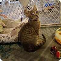 Adopt A Pet :: Cloudy - Geneseo, IL
