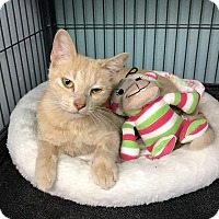 Adopt A Pet :: Peaches - Tomball, TX