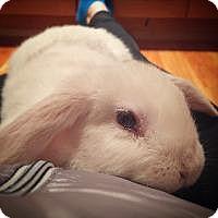 Adopt A Pet :: Gizmo - Woburn, MA