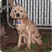 Adopt A Pet :: Fancy - Tacoma, WA