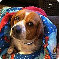 Adopt A Pet :: Ripley - Portland, OR