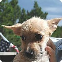 Adopt A Pet :: Teddy - Denver, CO