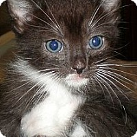 Adopt A Pet :: Jay - Xenia, OH
