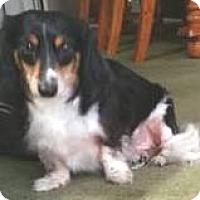 Adopt A Pet :: Twix - geneva, FL