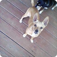 Adopt A Pet :: Buddy - Rancho Cordova, CA