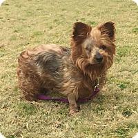 Adopt A Pet :: Jordan - Knoxville, TN