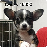 Adopt A Pet :: Decks - Greencastle, NC