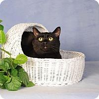 Adopt A Pet :: Donny - mishawaka, IN