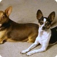 Adopt A Pet :: Chewy & Louie - Mesa, AZ