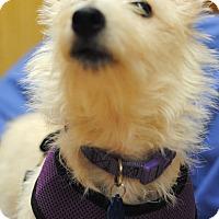 Adopt A Pet :: Violet-Pending Adoption - Omaha, NE