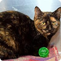 Adopt A Pet :: Angel - East Brunswick, NJ