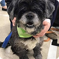 Adopt A Pet :: Shakespeare - Indianapolis, IN