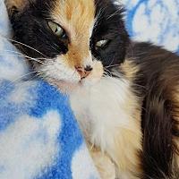 Adopt A Pet :: Gem - Hornell, NY