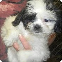 Adopt A Pet :: Chelsea - Antioch, IL