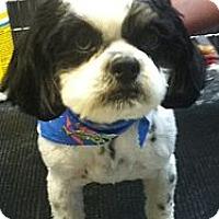 Adopt A Pet :: OREO - Pembroke pInes, FL