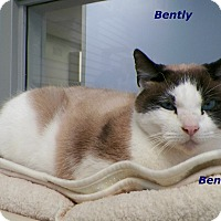 Adopt A Pet :: Bently - Dover, OH
