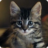 Adopt A Pet :: Keeley - Irvine, CA