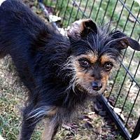 Adopt A Pet :: Ginger - Meridian, ID