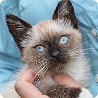 Adopt A Pet :: Azure - Stanford, CA