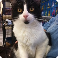 Adopt A Pet :: Thunder N - Sacramento, CA
