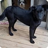 Adopt A Pet :: Carina - Roanoke, VA